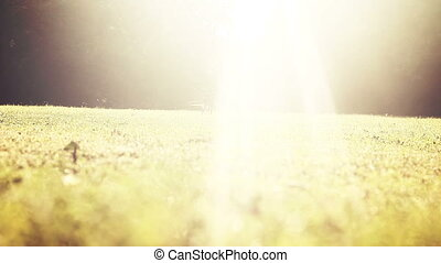Two dogs under sun rays. Closeup shot, HD