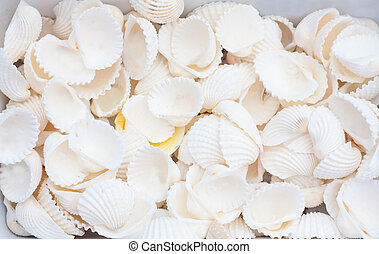 seashells - A collection of nice seashells for backgrounds