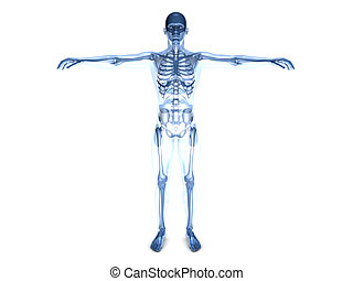 Anatomy Visualization - A medical visualization of human...