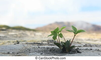 New plant - Ecology concept: a new sprout in the dry land