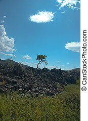 Standing Alone - A single bent tree stands alone in a rocky...
