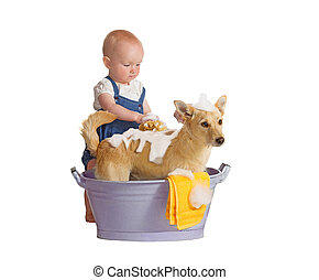 Baby washing dog - Cute baby washing yellow dog - isolated...