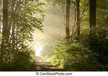 Path in spring woods at dawn - Forest path on a misty spring...