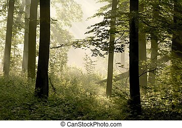 Misty spring forest at dawn