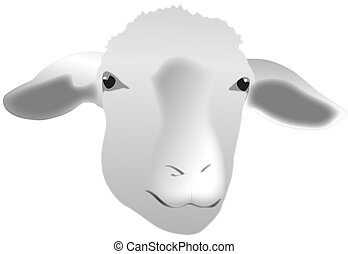 sheep portrait isolated on white