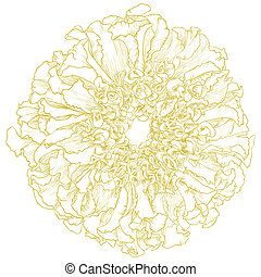Vector marigold flower - Vector marigold flower isolated on...