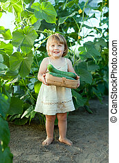 2 years child picking cucumbers in hothouse