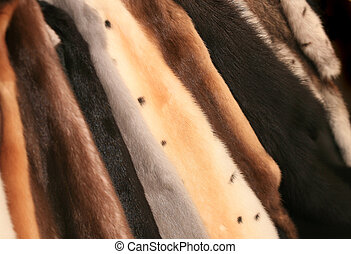 fur of mink of different colours - Beautiful expensive fur...