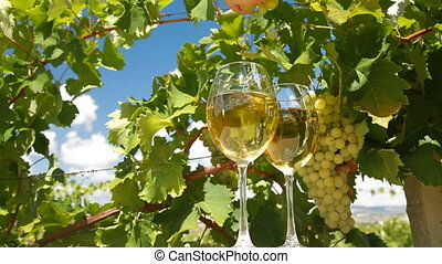 White Grape and Wine Glasses - Two glasses of wine and bunch...