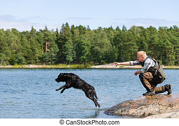 Dog training - The Labrador retriever is commanded to fetch