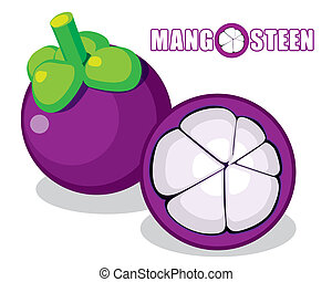 Mangosteen vector - The abstract of Mangosteen vector