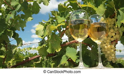 Two Wineglasses in Vineyard - Two glasses of white wine and...