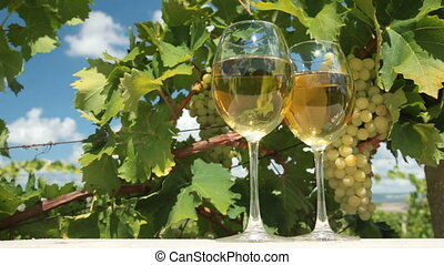 White Grape and Wine - Two glasses of white wine and bunch...