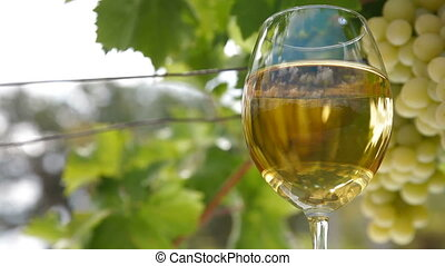 White Grape and Wine Glass - Glass of white wine and bunch...