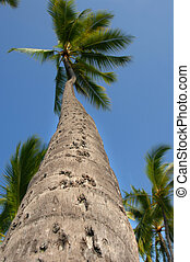 Twisted Pam Tree - Towering palm tree twists into the...