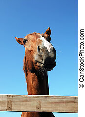 Horse Distortion - Low angle, comical shot of quarter horse...