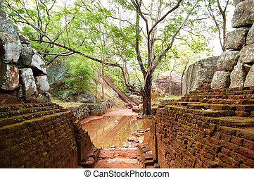 The garden near Sigiriya (Lion's rock) is an ancient rock fortress and palace ruins, Sri Lanka