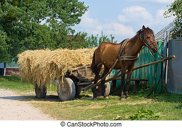Horse with a cart loaded hay - A chestnut mule harnessed to...