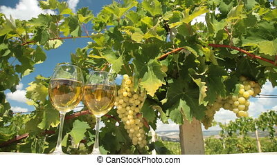 Muscat White Wine Glasses - Two glasses of white wine and...