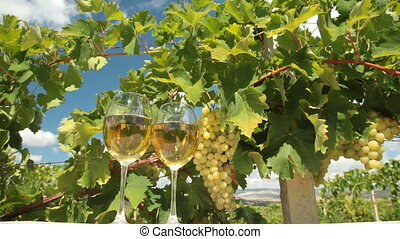 DOLLY: White Grape and Wine - Two glasses of white wine and...