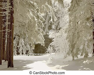 Winter forest path - Picturesque winter lane leading through...