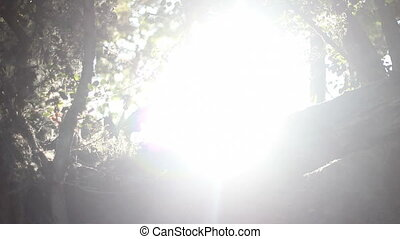 the light forrest sun flare - Natural forrest sun flare...