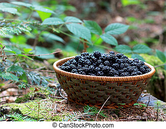 basket of blackberries in the forest
