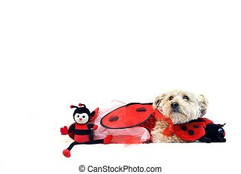 Lady Bug for Valentines Day - Valentines Day costume has...