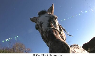 Close up of horse. - Cadrona, New Zealand. Close up of horse...