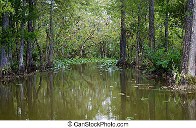 Florida Everglades - The Everglades are subtropical wetlands...