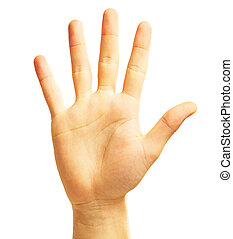 Human Hand On White Background