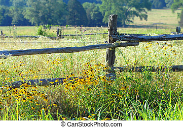 Country Byway - Rustic fence posts are overgrown with...