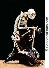 Monkey skeleton on black background