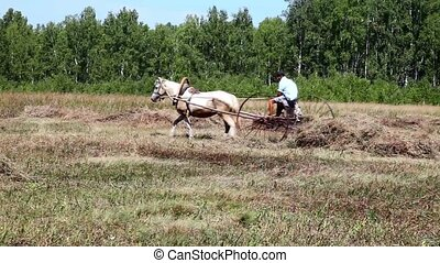 Man on a horse gathers hay in the haystack