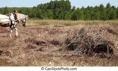 Peasant - Man on a horse gathers hay in the haystack