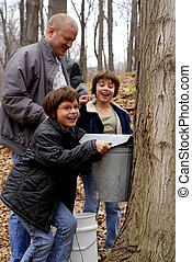 Collecting Sugar Maple - Two girls laughing when they...