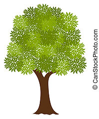 Noble tree - Noble old tree. Vector illustration