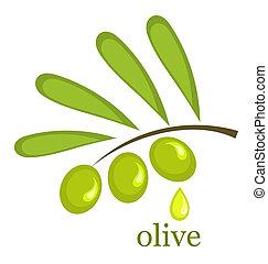 Olive branch. Vector illustration