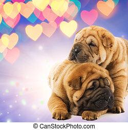 dwa, Shar-pei, szczeniaki, miłość