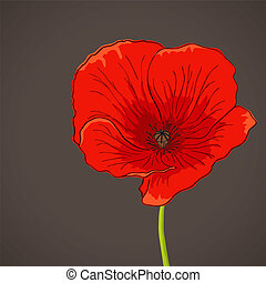 Poppy - Vector pictures with red poppy flower