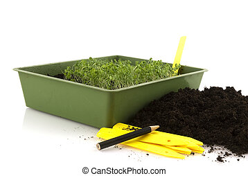 sowing seeds - little plants are growing up