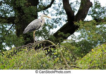 Heron at tree branch