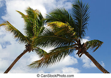 Palm trees - Two palm tree tops on blue sky background