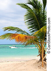 Tropical beach with palm tree and small boat