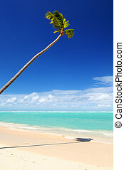 Tropical beach - Pristine tropical beach with palm tree in...