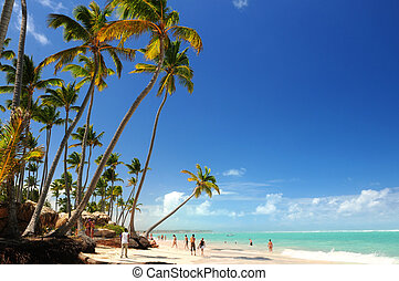 Tropical beach with palm trees on Caribbean island