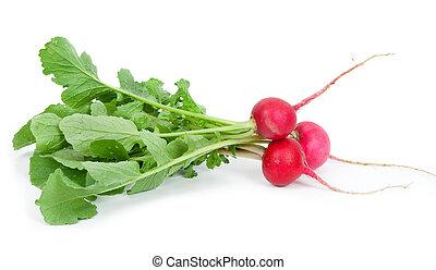 Bunch of fresh radish