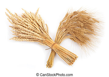 Sheaf of wheat and rye
