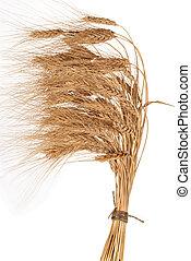 Sheaf of wheat