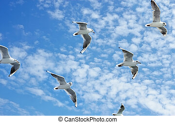 Seagulls group in flight - Group of sea gulls against a blue...
